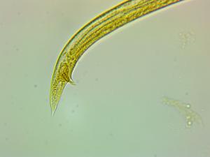 worm-0001