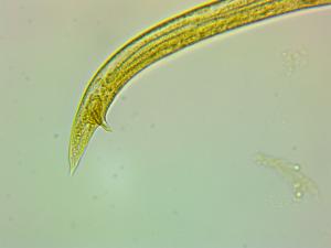worm-0002