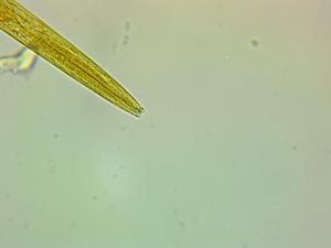 worm-0003